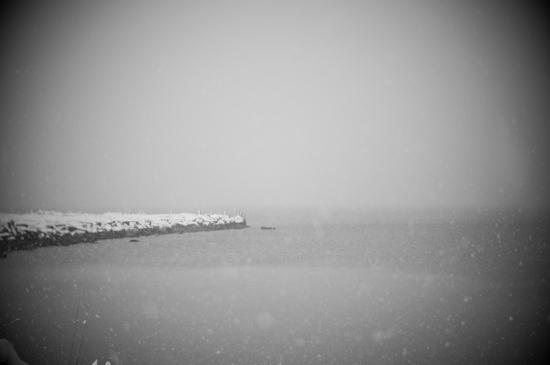 Winter Sky Tree - 3703