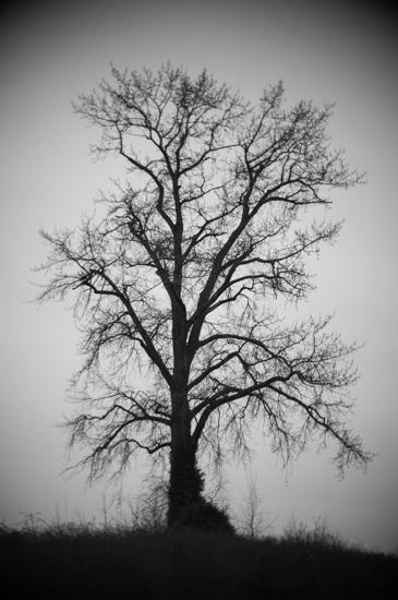 Winter Sky Tree - DSC4293